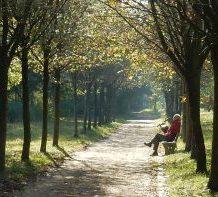 a-walk-in-the-park-leadershipdialogue.eu_-2
